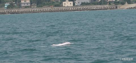 海洋的希望~從香港中華白海豚希望(HOPE)談起