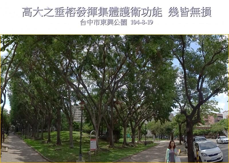 颱風後,民間分析台中市行道樹風損成因  阻止台中市政府「濫剪、移植」行道樹