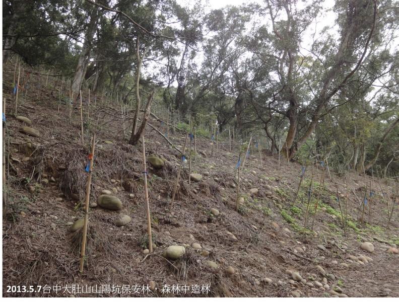 台中荒謬的「森林中造林」合法化 林佳龍為種100萬棵樹打前鋒?