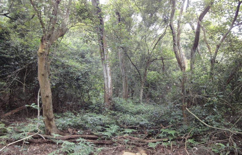 面對氣候變遷,讓自然的森林涵養水源─檢討保安林的經營管理,以荒謬的「森林中造林」為例