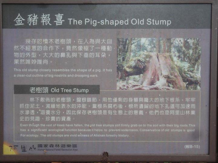 【電子報第410期】森林遊樂區需要「轉型正義」