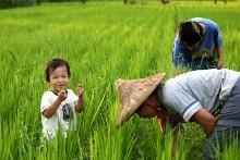 【 隨波逐稻 】認穀工作坊! 邀您來灣寶種自己的米!