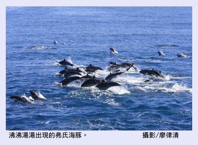【黑潮觀點B】關於愛與自由的鯨豚二、三事@ 文/廖律清