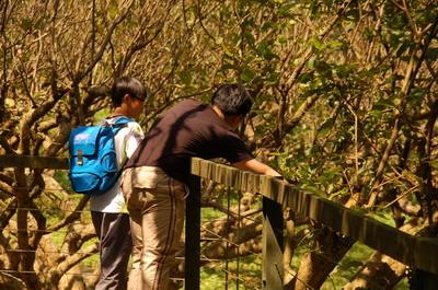 【人禾新聞】內雙溪森林自然中心推出「草木皆賓」成人專屬植物課程