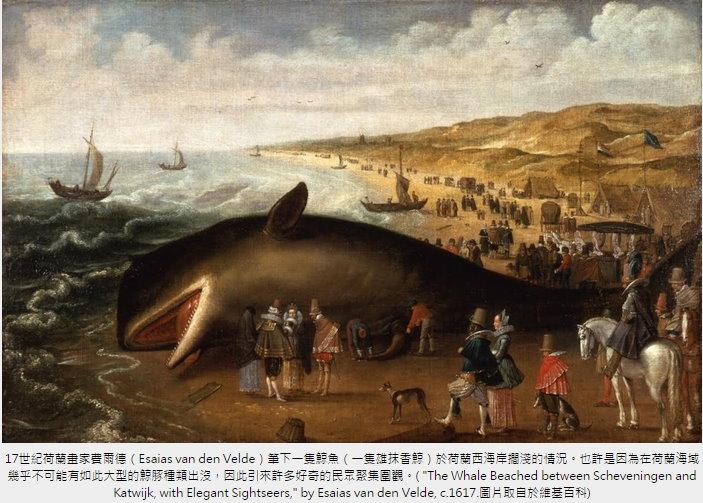 [鯨豚全球見聞] 為什麼要蒐集鯨豚屍體?