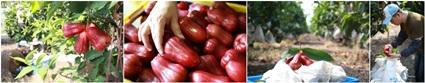 【活動托播】2014屏東好農玩創意暑期體驗營