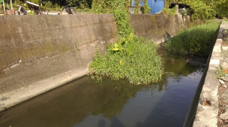 再次看見魚兒魚兒水中游---親近大自然的生態調查
