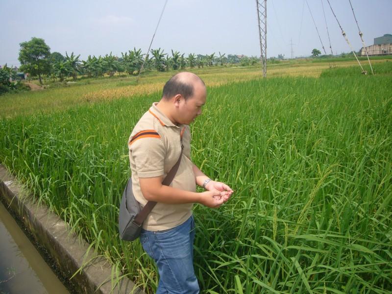【社造專題】從竹子湖的蓬萊米到越南的SRI米