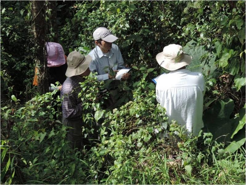 鹿谷植物生態調查工作假期(2014年1-2月)