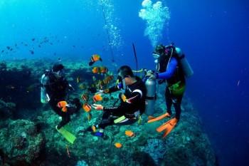跨越障礙,泳敢潛進  第三屆身障潛水考照,學長姊陪伴學弟妹