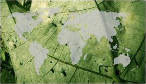 森林認證機構的角力:中國森林認證