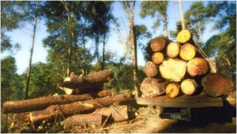 利用財務機制促進永續林業