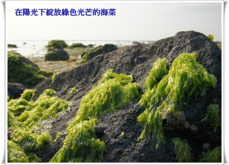 春天的綠光-海菜