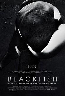 【黑潮X翻譯】虎鯨的智慧︰專訪電影Blackfish中的神經科學家。  原文/ Aviva Hope Rutkin 、譯文/徐子恆