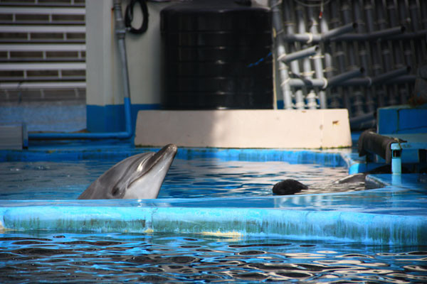 【黑潮X觀點】海豚微笑的背後 @文/蔡偉立