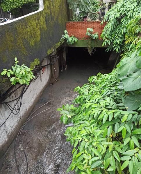 營造的世界級的水文化景觀,水水新樹林 (2)