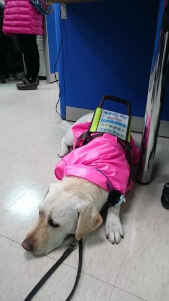 盲人的靈魂之窗—「導盲犬」